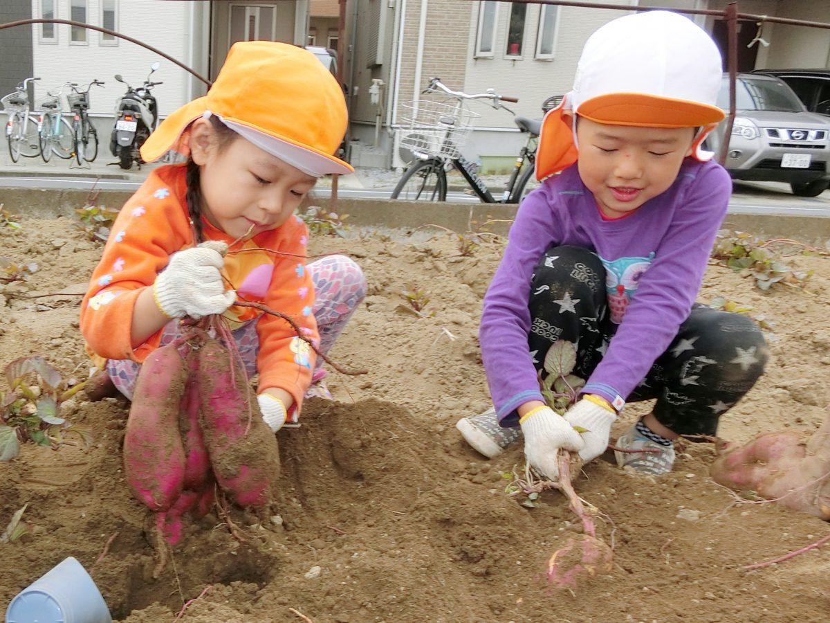 みんなでさつまいも掘りに行ってきました!